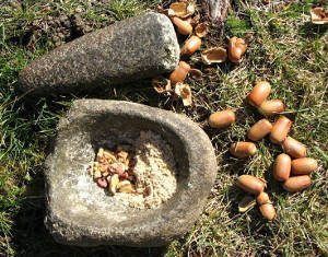 North American Indian Recipes –  Acorn Recipes & Facts!