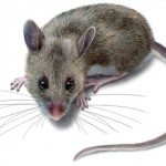 Hantavirus Infections